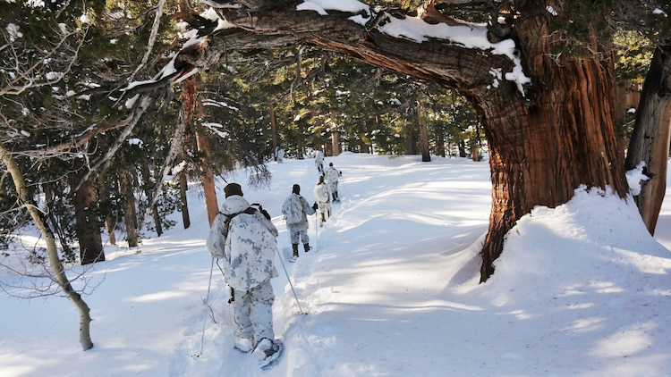 Marines with Company A, 2nd Assault Amphibian Battalion, conduct a patrol as part of an avalanche scenario at the Mountain Warfare Training Center in Bridgeport, California, Jan. 20, 2016. Marines across II Marine Expeditionary Force and 2d Marine Expeditionary Brigade took part in the training in preparation for Exercise Cold Response 16 in Norway this March. The exercise will feature military training including maritime, land and air operations that underscore NATO's ability to defend against any threat in any environment.