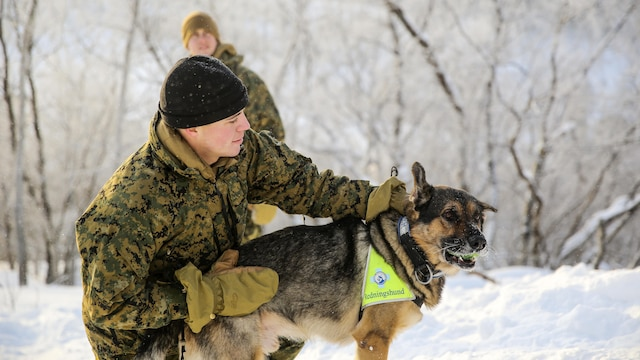 Capt. Robert Mortenson, a company commander with Black Sea Rotational Force, spends time with a Norwegian search-and-rescue dog during cold-weather training at Skoganvarre, Norway, Feb. 5, 2016. The Arctic training was conducted by the U.K. Royal Commandos and hosted by the Norwegian military to improve the U.S. Marine Corps' capability to support their NATO Allies in extreme environments.