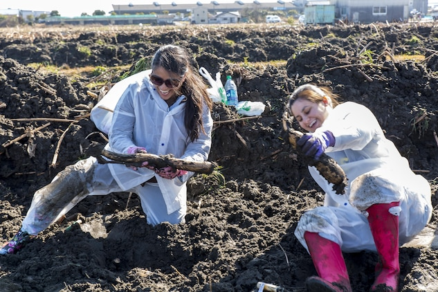 Mandie Woods, left, and April Rosales, residents from Marine Corps Air Station Iwakuni dig lotus roots during a cultural adaptation program at Yamaguchi's Agricultural, Forestry, Fisheries, and? Stockbreeding in Iwakuni City, Japan, Feb. 10, 2016. After learning about lotus roots, residents along with other Japanese nationals took to the fields to dig up their own.