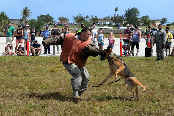 A military working dog team from the 36th Security Forces Squadron demonstrates patrol training Feb. 20 at the 2016 Pacific Air Partners Open House at Andersen Air Force Base, Guam. For the open house, the 36th SFS military working dog unit performed multiple training scenarios in front of the crowds.(U.S. Air Force Photo/Airman 1st Class Alexa Ann Henderson)