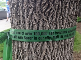 "More than 100,000 trees in the Omaha area could potentially be affected if infested by invasive Emerald Ash Borer. The ribbons, placed through a program at the Univeristy of Nebraska Lincoln are aimed at informing the public about the threat of invasive species such as the Emerald Ash Borer. The ribbons say ""This is one of over 100,000 ash trees that will die from Emerald Ash Borer in our city. Visit nfs.unl.edu/eab Please learn more about how to prevent the destructive insect from destroying trees."