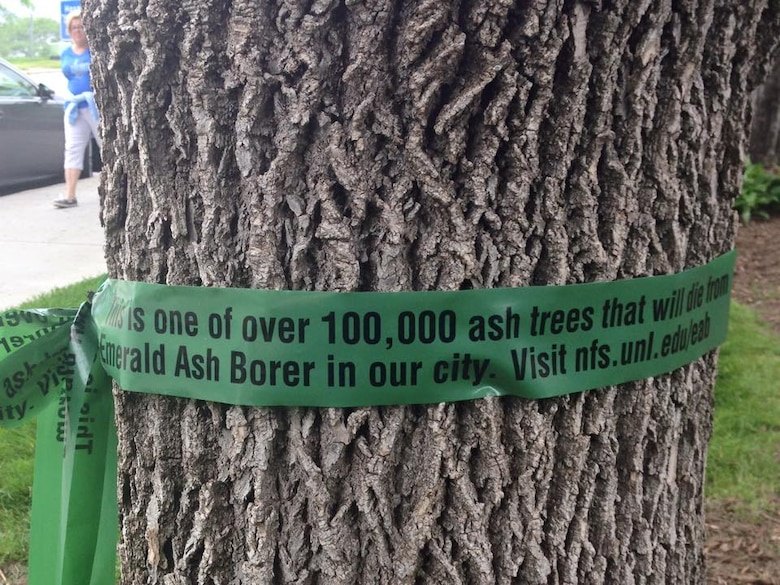 """More than 100,000 trees in the Omaha area could potentially be affected if infested by invasive Emerald Ash Borer. The ribbons, placed through a program at the Univeristy of Nebraska Lincoln are aimed at informing the public about the threat of invasive species such as the Emerald Ash Borer. The ribbons say """"This is one of over 100,000 ash trees that will die from Emerald Ash Borer in our city. Visit nfs.unl.edu/eab Please learn more about how to prevent the destructive insect from destroying trees."""