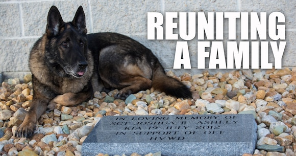 Military Working Dog Sirius sits near the memorial stone of his former handler, Sgt. Joshua Ashley, outside of 2nd Law Enforcement Battalion's Ashley Kennels at Camp Lejeune, N.C., Feb. 25, 2016, shortly after his retirement ceremony and adoption. Sirius' former handler, Sgt. Joshua Ashley, was killed while on patrol in 2012 in support of Operation Enduring Freedom. Ashley's family adopted Sirius, in keeping with the fallen Marine's wishes. (U.S. Marine Corps Photo by Cpl. Michelle Reif/Released.)