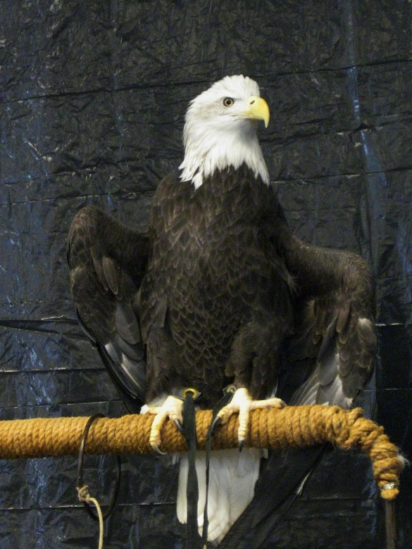 Eagle Days are set for Milford Lake Jan. 16 and Clinton Lake Jan. 23.