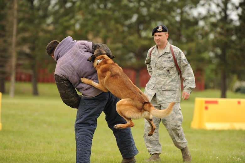 CAVALIER AIR FORCE STATION, N.D. – Zumba, 319th Security Forces Squadron Military Working Dog, tears into Staff Sgt. Richard Lyn, 319th SFS MWD trainer, on Cavalier Air Force Station, N.D., June 11, 2016.  The 319th SFS MWD Unit provided the demonstration during the Cavalier AFS open house. (U.S. Air Force photo by Senior Airman Ryan Sparks)