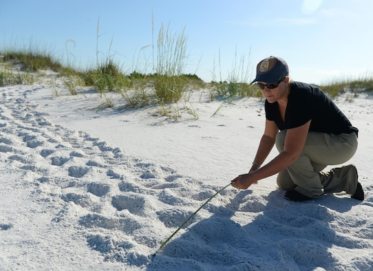 Danielle Bumgardner, 325th Civil Engineer Squadron Environmental Flight biologist, measures the width of a path left behind after a sea turtle nested at Tyndall Air Force Base, Fla., June 22, 2016.  Along the Florida coast, sea turtles make between 40,000 and 84,000 nests annually. In 2015, Tyndall AFB had 94 sea turtle nests on the beach. (U.S. Air Force photo by Airman 1st Class Cody R. Miller/Released)