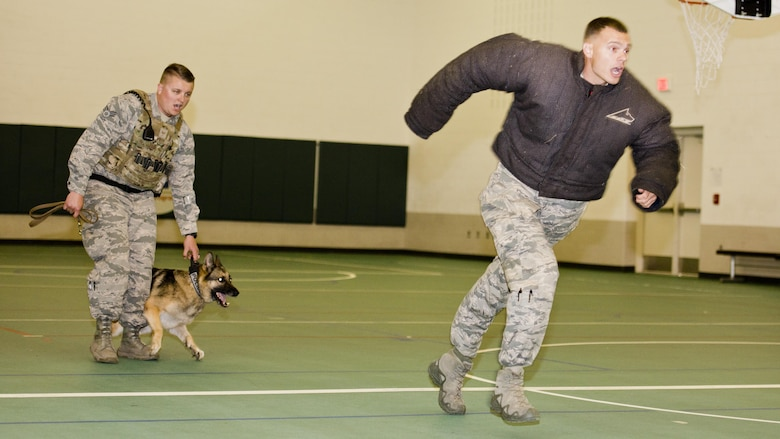 Staff Sgt. Stephen Nores, 5th Security Forces Squadron military working dog trainer, runs as Senior Airmen Dakota Willis, 5th SFS MWD hander, verbally briefs him that he will release his dog at Minot Air Force Base, N.D., July 7, 2016. Nores wore a protective jacket to demonstrate MWD Cyndy's ability to stop a noncompliant suspect. (U.S. Air Force photo/Airman 1st Class J.T. Armstrong)