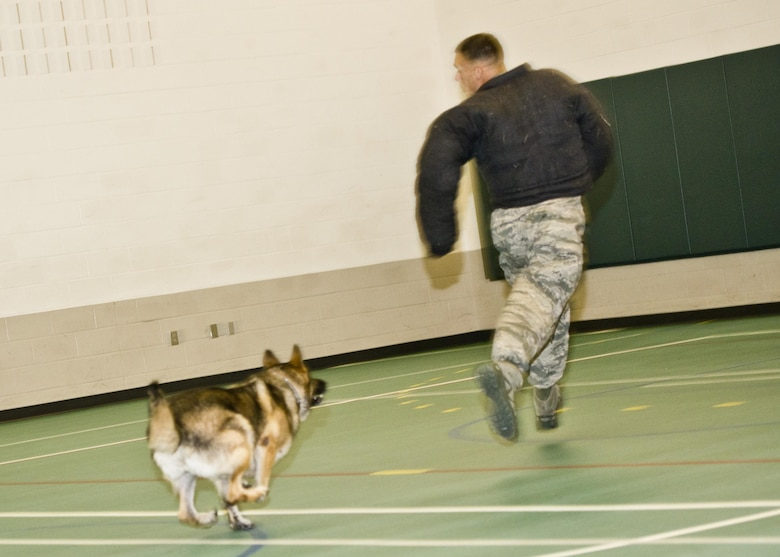 Military working dog Cyndy pursues a suspect, Staff Sgt. Stephen Nores, 5th Security Forces Squadron military working dog trainer, at the Youth Center at Minot Air Force Base, N.D., July 7, 2016. Nores wore a protective jacket to demonstrate MWD Cyndy's ability to stop a noncompliant suspect. (U.S. Air Force photo/Airman 1st Class J.T. Armstrong)