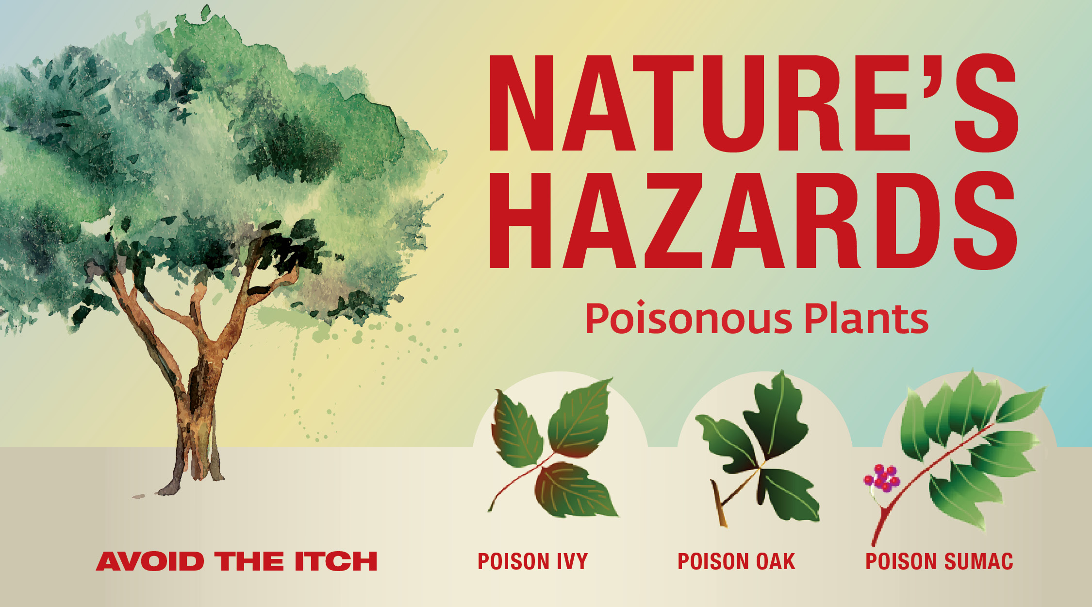 nature s hazards poisonous plants eglin air force base display