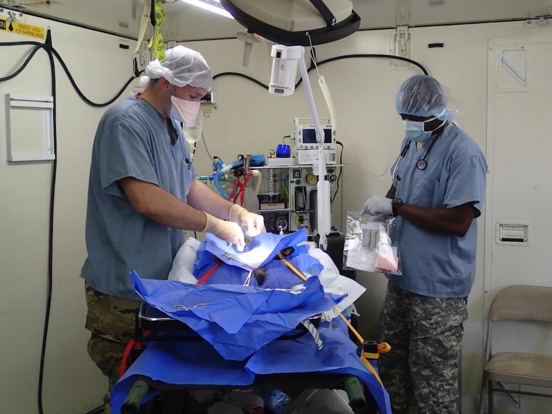 Capt. Matthew Watson, a veterinarian, and Spc. Omokorede Fatile, a food inspector, both from the 422nd Medical Detachment Veterinary Services out of Rockville, Md.,  perform a neuter procedure on a cat during Greater Chenango Cares, July 20, 2016.  Greater Chenango Cares is one of the Innovative Readiness Training events which provides real-world training in a joint civil-military environment while delivering world class medical care to the people of Chenango County, N.Y., from July 15-24.