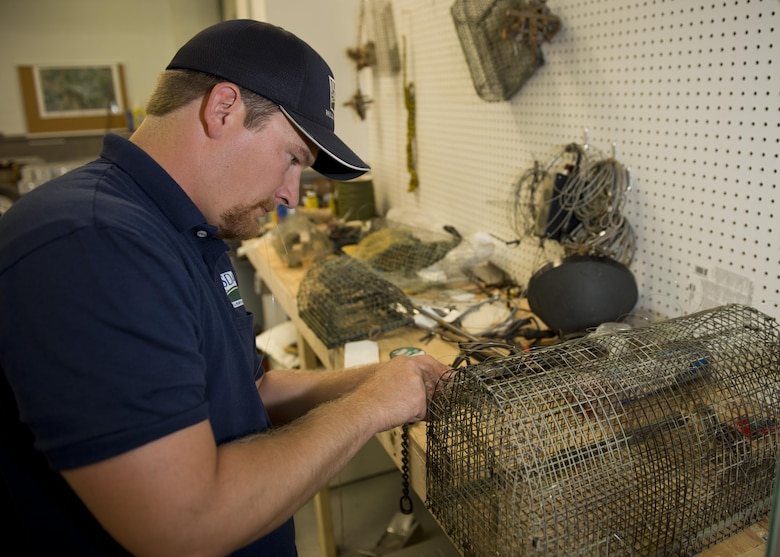 Dale Waites, U.S. Department of Agriculture wildlife biologist, weaves slipknots onto a live trap at Minot Air Force Base, N.D., July 15, 2016. Waites relocates birds away from the airfield, as part of the Bird Airstrike Hazard program (BASH), to mitigate damage to aircraft engines. (U.S. Air Force photo/Airman 1st Class J.T. Armstrong)