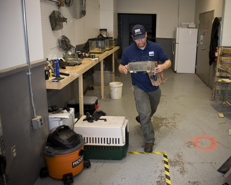 Dale Waites, U.S. Department of Agriculture wildlife biologist, carries a live trap at Minot Air Force Base, N.D., July 15, 2016. Waites relocates birds away from the airfield, as part of the Bird Airstrike Hazard program (BASH), to mitigate damage to aircraft engines. (U.S. Air Force photo/Airman 1st Class J.T. Armstrong)