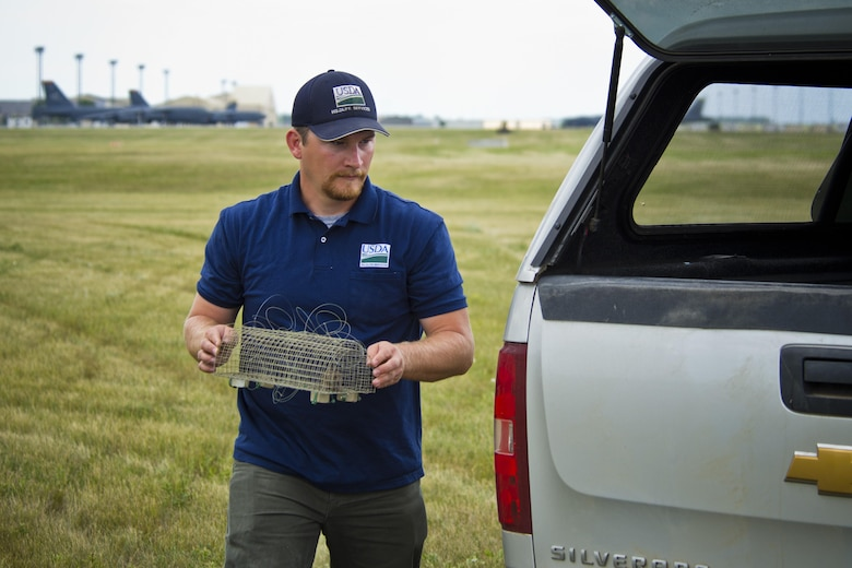 Dale Waites, U.S. Department of Agriculture wildlife biologist, carries a live trap in hopes of catching an American kestrel on the airfield at Minot Air Force Base, N.D., July 15, 2016. The birds nest on the airfield and are a hazard to the B-52H Stratofortress. They can cause damage to the engines of incoming and outgoing aircraft. (U.S. Air Force photo/Airman 1st Class J.T. Armstrong)