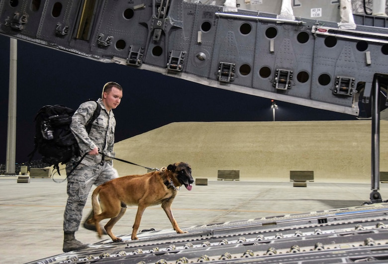 Military working dog Vvass looks at the camera as he leads his handler Staff Sgt. Christopher Hotine, 380th Expeditionary Security Forces Squadron, on board a C-17 Globemaster III Germany July 18, 2016, at Al Udeid Air Base, Qatar. VVass and Hotine were travelling through AUAB for treatment at a U.S. Army veterinary facility. (U.S. Air Force photo/Technical Sgt. Carlos J. Treviño)