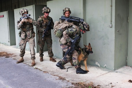 A French Army dog handler and U.S. Marines with Charlie company, 1st Battalion 8th Marine Regiment, Special Purpose Marine Air-Ground Task Force-Crisis Response-Africa prepare to breach and clear a building during a combined arms attack aboard Camp Sissonne, France, June 21, 2016. During CENZUB training SPMAGTF-CR-AF Marines had the opportunity to work in cooperation with company of French Army soldiers, integrating their skills and resources including weaponry and military vehicles to form an effective battle plan, similar to what they may face in the event of a future crisis. (U.S. Marine Corps photo by Sgt. Kassie McDole/Released.)