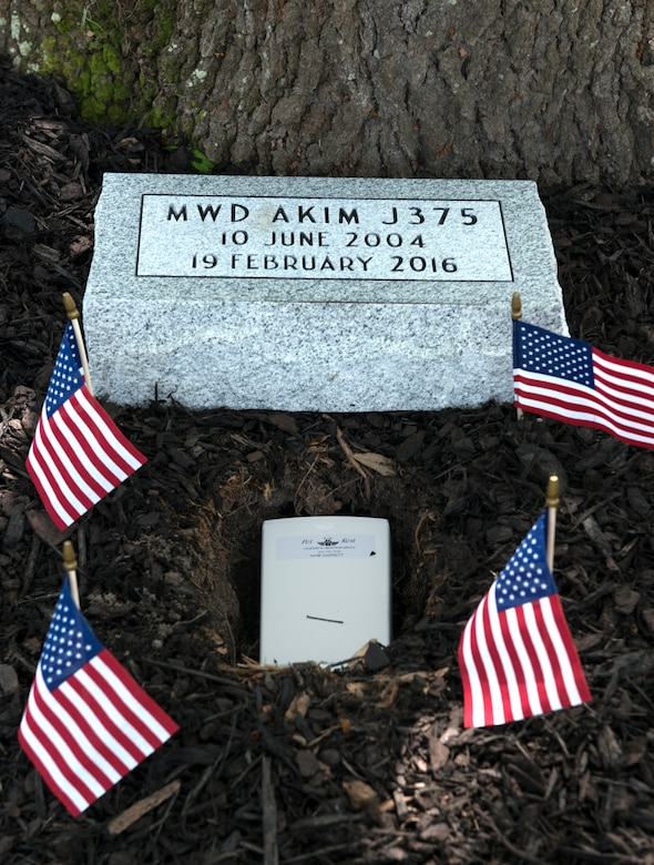 U.S. flags decorate the grave of Military Working Dog Akim/J375, a 628th Security Forces Squadron military working dog, at Joint Base Charleston, May 26, 2016. Akim was adopted by his handler, Tech. Sgt. Timothy Garrett, a 628th Security Forces Squadron military working dog handler, after retiring in 2014. Akim passed away Feb. 19, 2016 due to health issues caused by his stressful career and old age. (U.S. Air Force photo/Airman Megan Munoz)