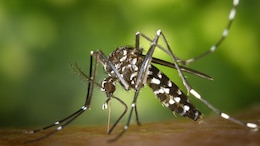 The Aedes Aegypi mosquito is one of two found in tropical climate countries which is capable of carrying the Zika virus. It is not native to the United States but has been found in 12 of California's 58 counties. The mosquitoes are transported into this country by visitors and residents.