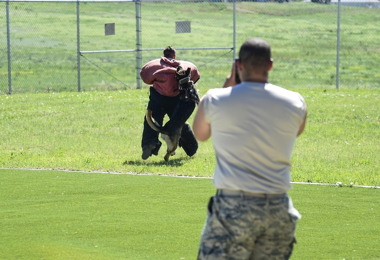 A U.S. Air Force Academy cadet captures a photo of another cadet getting taken down by 460th Security Forces Squadron military working dog Rex during a MWD demonstration June 15, 2016, at Buckley Air Force Base, Colo. The cadets toured Buckley's units and missions, while engaging with leaders of all ranks in order to gain a better understanding of an operational air force base. (U.S. Air Force photo by Tech. Sgt. Nicholas Rau)