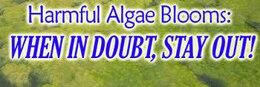 Blue Green Algae notice