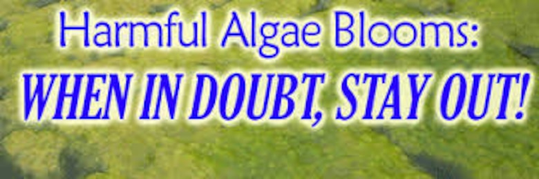 Blue Green Algae notice