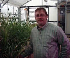 Tim Cary, research agronomist with the U.S. Army Engineer Research and Development Center's Cold Regions Research and Engineering Laboratory, monitors switchgrass in a CRREL greenhouse in Hanover, New Hampshire.