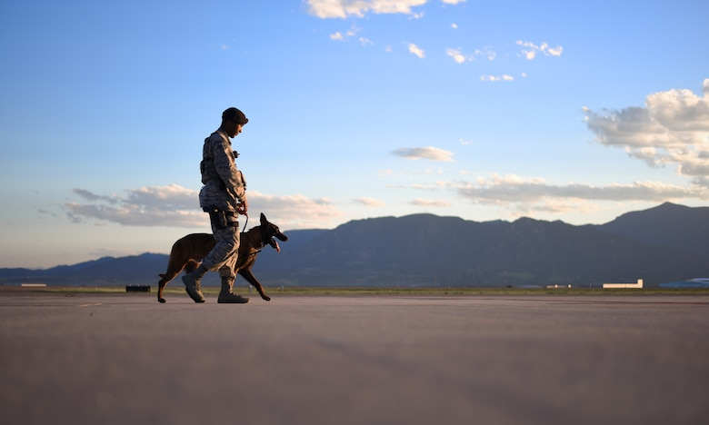 Senior Airman Tariq Russell, 21st Security Forces Squadron military working dog handler, and his partner, Ppaul, walk the flight line at Peterson Air Force Base, Colo., June 14, 2016. Along with detection, Ppaul can be used for suspect apprehension and search and rescue missions. (U.S. Air Force photo by Airman 1st Class Dennis Hoffman)