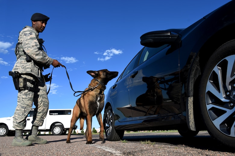 Senior Airman Tariq Russell, 21st Security Forces Squadron military working dog handler, and his partner, Ppaul, inspect a car at Peterson Air Force Base, Colo., June 14, 2016. Russell pays close attention to Ppaul waiting for a sign he has detected something suspicious. (U.S. Air Force photo by Airman 1st Class Dennis Hoffman)