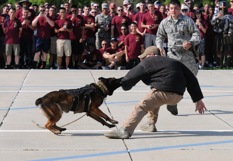 "Members of the 81st Security Forces Squadron conduct a military working dog demonstration during the 81st Training Group drill down at the Levitow Training Support Facility drill pad June 17, 2016, Keesler Air Force Base, Miss. The 335th Training Squadron ""Bulls"" placed first overall. (U.S. Air Force photo by Kemberly Groue)"