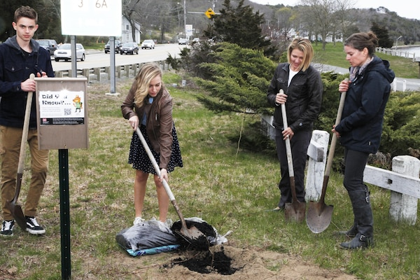 Maddy Ames, a student with the Cape Cod Learners Cooperative, helps plant a Chestnut tree during the unveiling event on May 1, 2016.