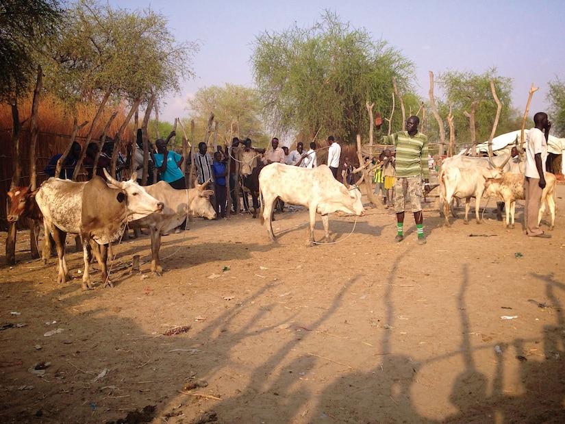 Cattle auction, Lankien, South Sudan