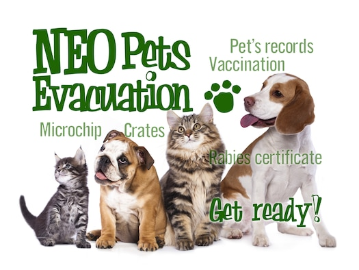 Eight things that Kadena pet owners should know about their pets regarding the Noncombatant Evacuation Operation process.  (U.S. Air Force graphic by Naoko Shimoji)