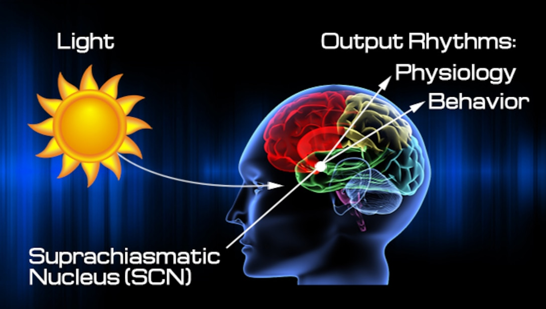 This diagram illustrates the influence of light and darkness on the circadian rhythm and related physiology and behavior through the suprachiasmatic nucleus in the brain. (Graphic courtesy of Steve Thompson, AFMS Public Affairs)