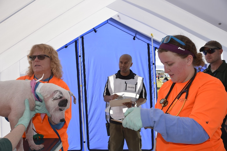Maj. Lonnie Pirtle, (center), Air Forces Northern Installation & Mission Support Division Readiness Section, watches a medical exam of a dog during an animal-related disaster response workshop at the Bay County Fairgrounds Feb. 28. Hosted by the Florida State Agricultural Response Team and Bay County Emergency Services, the event brought together a wide variety of emergency-response agencies and focused on practicing providing disaster response assistance not only to people, but also their pets. Pirtle was an evaluator during the workshop.