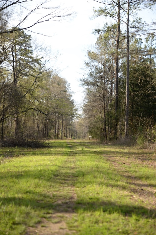 The nature trails on Columbus Air Force Base, Mississippi, are available for walking, running, biking or even horseback riding. Trails are open year-round, even during hunting season, as the trails are an off-limits area to gun hunting. (U.S. Air Force photo/Airman 1st Class John Day)