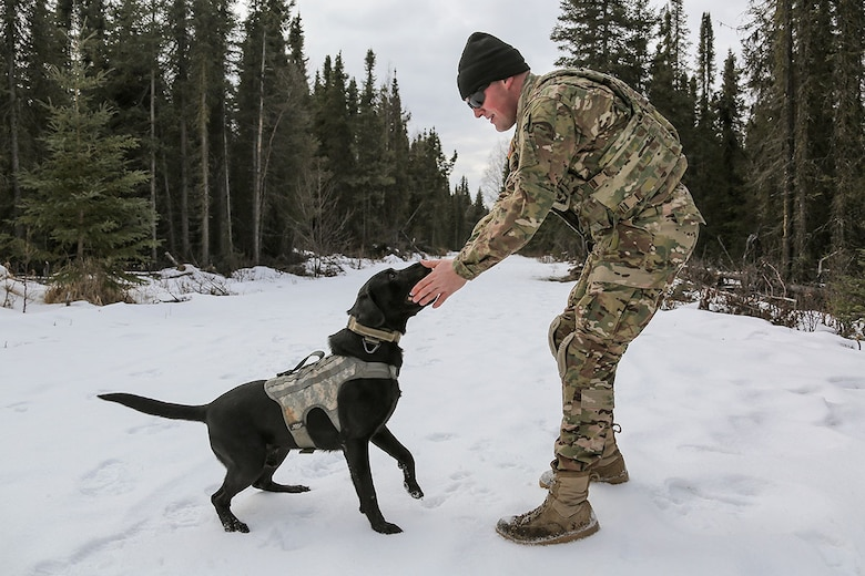 U.S. Army Spc. Jared Schultz and military working dog, Teddy, assigned to the 549th Military Working Dog Detachment, share a moment of levity after successfully detecting simulated hidden explosives while conducting K-9 training at Joint Base Elmendorf-Richardson, Alaska, March 17, 2016. Military working dogs are trained to respond to various law enforcement emergencies as well as detect hidden narcotics and explosives. (U.S. Air Force photo/Alejandro Peña)