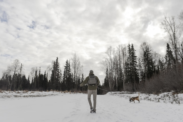 U.S. Air Force Staff Sgt. Joe Burns and military working dog, Ciko, assigned to the 673rd Security Forces Squadron, practice searching for simulated hidden explosives while conducting K-9 training at Joint Base Elmendorf-Richardson, Alaska, March 17, 2016. The military working dog teams are trained to respond to various law enforcement emergencies as well as detect hidden narcotics and explosives. (U.S. Air Force photo/Alejandro Pena)
