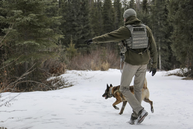 U.S. Air Force Staff Sgt. Joe Burns and military working dog, Ciko, assigned to the 673rd Security Forces Squadron, practice searching for simulated hidden explosives while conducting K-9 training at Joint Base Elmendorf-Richardson, Alaska, March 17, 2016. Military working dog teams are trained to respond to various law enforcement emergencies as well as detect hidden narcotics and explosives. (U.S. Air Force photo/Alejandro Pena)