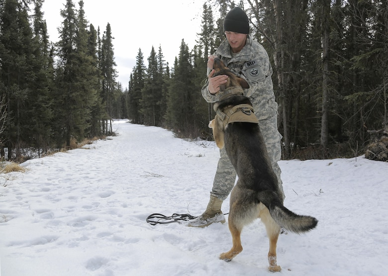 U.S. Army Pfc. Ian Smith encourages military working dog, Faro, assigned to the 549th Military Working Dog Detachment, after successfully detecting simulated hidden explosives during K-9 training at Joint Base Elmendorf-Richardson, Alaska, March 17, 2016. Military working dog teams are trained to respond to various law enforcement emergencies as well as detect hidden narcotics and explosives. (U.S. Air Force photo/Alejandro Pena)