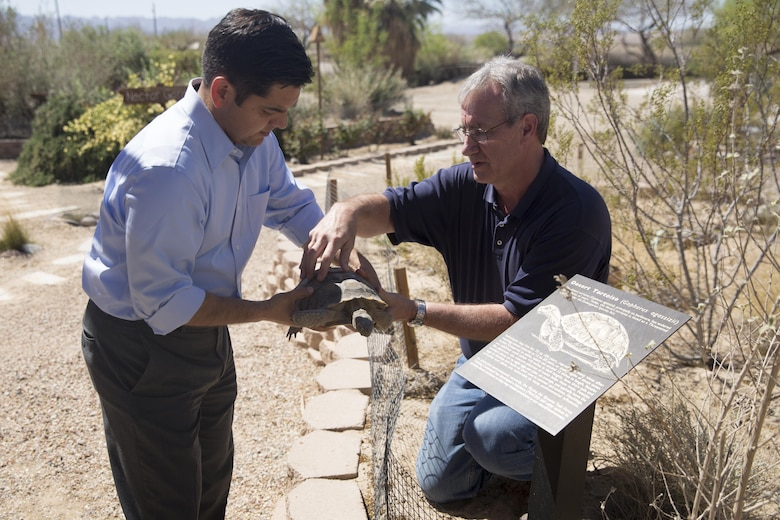 Brian Henen, ecologist, Natural Resources and Environmental Affairs, shows Congressman Raul Ruiz how to determine the age of a desert tortoise during his visit to the Combat Center, March 18, 2016. (Official Marine Corps photo by Cpl. Medina Ayala-Lo/Released)