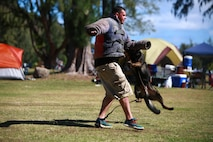 MARINE CORPS TRAINING AREA BELLOWS – Police Officer Travis Cleaveland, a military working dog handler for the Provost Marshal's Office Military Working Dogs Unit with Headquarters Battalion from Marine Corps Base Hawaii, demonstrates a mock takedown with Nero, one of the military police dogs there for Cub Scout troop 311 aboard Marine Corps Training Area Bellows, March 5, 2016. Marines and civilian officers gave different commands to their dogs, showing off their intelligence and obedience. The dog handlers also wore a bite jacket for a mock take down by the dogs to show the scouts the discipline and training the dogs show when facing a real threat. Cleaveland, a St. Cloud, Minn., native, said his military working dogs are constantly training and ready on command to stop any threat. (U.S. Marine Corps Photo by Lance Cpl. Jesus Sepulveda Torres)
