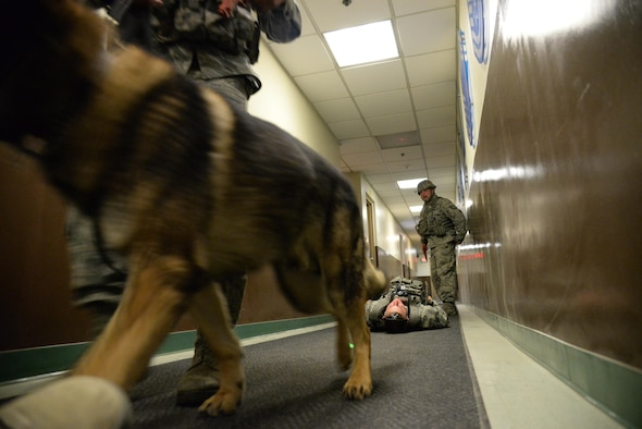 A 51st Security Forces Squadron military working dog scours a building with its trainer during active shooter exercise at Osan Air Base, Republic of Korea, May 6, 2016.  Osan's defenders neutralized the simulated active shooter minutes after they entered the building. The scenario officially kicked off the week-long readiness exercise, Beverly Herd 16-01. (U.S. Air Force photo by Tech. Sgt. Travis Edwards/Released)