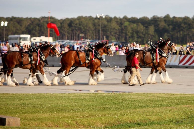 "The Budweiser Clydesdales majestically trot across the flight line during an aerial performance at the 2016 MCAS Cherry Point Air Show – ""Celebrating 75 Years"" at Marine Corps Air Station Cherry Point, N.C., April 29, 2016.