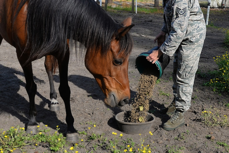 Staff Sgt. Katrina Rubisch, 4th Equipment Maintenance Squadron aircraft armament systems technician, feeds her horses, March 25, 2016, in Goldsboro, North Carolina. Rubisch owns two horses whom she interacts with and feeds twice a day. (U.S. Air Force photo by Airman 1st Class Ashley Williamson/Released)