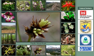 The National Wetland Plant List used by the Corps and other federal agencies to delineate wetlands is now web-based. The NWPL contains more than 8,000 plant species, including six new species in the continental U.S. The NWPL plays a critical role in wetland determinations under the Clean Water Act and is available to the public on the Corps' website.