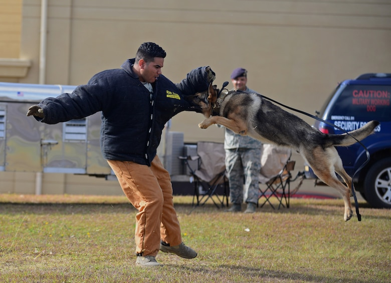 Staff Sgt. Adrian Chavez, 36th Security Forces Squadron military working dog handler, demonstrates how a dog apprehends a perpetrator May 17, 2016, at Andersen Air Force Base, Guam. Airmen from the 36th and 736th Security Forces Squadrons and Air Force Office of Special Investigations Det. 602 displayed their gear and skillsets to Andersen students during Police Week. (U.S. Air Force photo by Senior Airman Joshua Smoot)