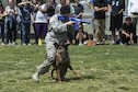 Staff Sgt. Anique, 799th Security Forces Squadron military working dog handler, and her partner MWD Samuel, give a K-9 demonstration at a local high school March 17, 2016 in Indian Springs, Nevada. MWDs and their handlers train together to protect military personnel and equipment, detect explosives and conduct search and rescue operations during disasters. (U.S. Air Force photo by Senior Airman Adarius Petty/Released)