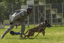 U.S. Air Force Staff Sgt. Mathis Williams, a 354th Security Forces Squadron (SFS) MWD handler, commands MWD Oopal during the MWD competition at Eielson Air Force Base, Alaska, May 19, 2016, as part of National Police Week activities. The 354th SFS partnered with local law enforcement and U.S. Army counterparts to celebrate Police Week. (U.S. Air Force photo by Staff Sgt. Joshua Turner/Released)