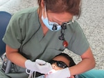 U.S. Army Maj. (Dr.) Margaret Novicio, Joint Task Force-Bravo Medical Element dentist, performs a molar extraction on a pediatric patient in the Catholic University, Tegucigalpa, Honduras, May 6, 2016. MEDEL supported U.S. Army Dental Command and U.S. Southern Command during pediatric dental humanitarian assistance projects in Tegucigalpa May 3-12. (U.S. Army photo by 1st Lt. Jenniffer Rodriguez)