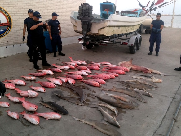 The catch from a lancha interdicted near the U.S./Mexico maritime border is