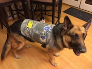 Jax is a German Shepherd who is completing training as a certified therapy dog for the 163rd Attack Wing at March Air Reserve Base. Jax tries on his new vest adorned with all the unit patches from March Air Reserve Base. (Courtesy Photo by David Cunningham)